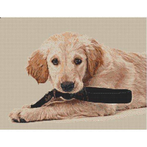 Golden Retriever Puppy Counted Cross Stitch Kit