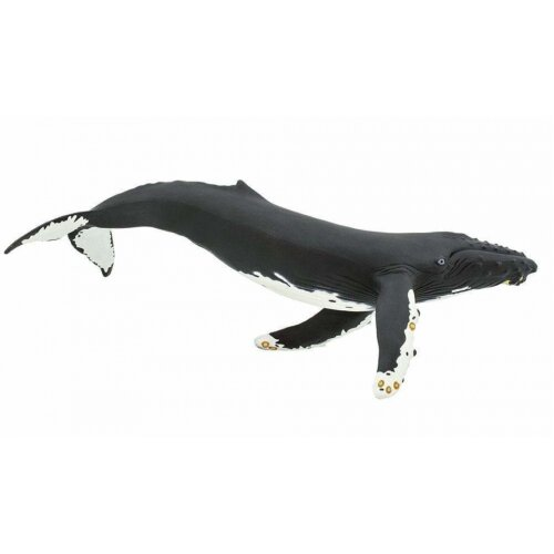 sea creatures Humpback junior 35.2 cm black and white