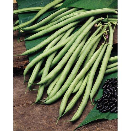 Vegetable - Climbing French Bean - Cobra - 40
