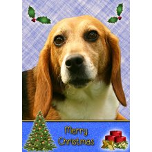 "Beagle Christmas Greeting Card 8""x5.5"""