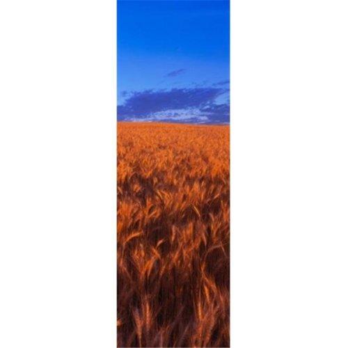 Wheat Field WA Poster Print by  - 12 x 36