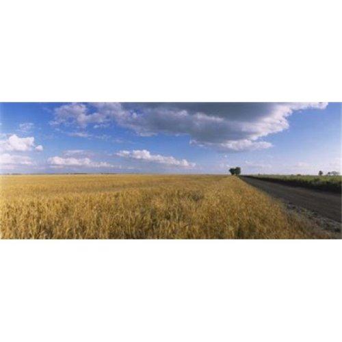 Wheat crop in a field  North Dakota  USA Poster Print by  - 36 x 12