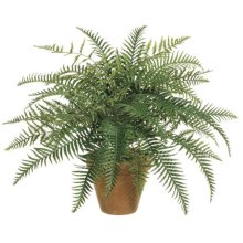 24 Inch River Fern Bush X35 - Qty of 6