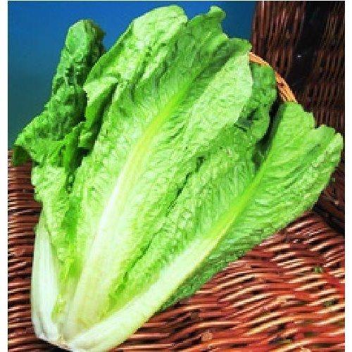 Vegetable - Lettuce - Lobjoits Green - 100 Seeds