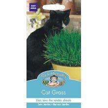Mr Fothergills - Pictorial Packet - Flower - Cat Grass - Avena sativa - 25g Seed