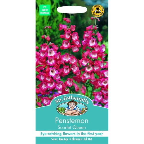Mr Fothergills - Flower - Penstemon Scarlet Queen - 500 Seeds