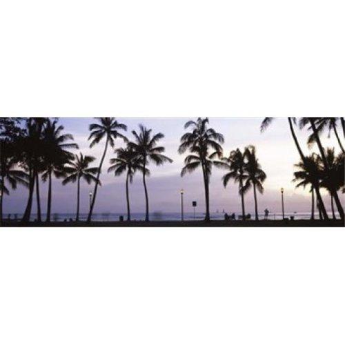 Palm trees on the beach  Waikiki  Honolulu  Oahu  Hawaii  USA Poster Print by  - 36 x 12