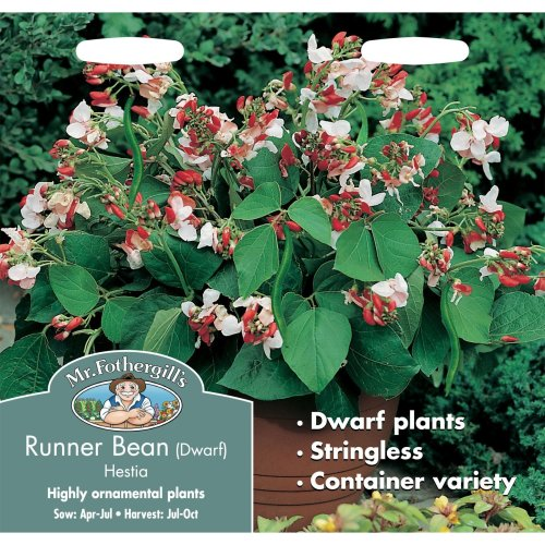 Mr Fothergills - Pictorial Packet - Vegetable - Runner Bean Hestia Dwarf - 45 Seeds