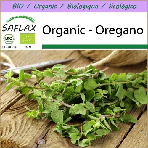 SAFLAX  - Organic - Oregano - 1500 seeds  - Origanum heracleoticum