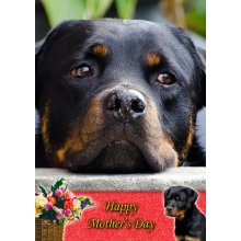 """Rottweiler Mother's Day Greeting Card 8""""x5.5"""""""