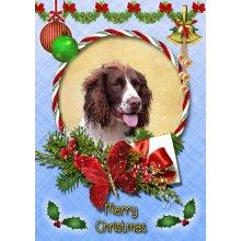 "Springer Spaniel Christmas Greeting Card 8""x5.5"""