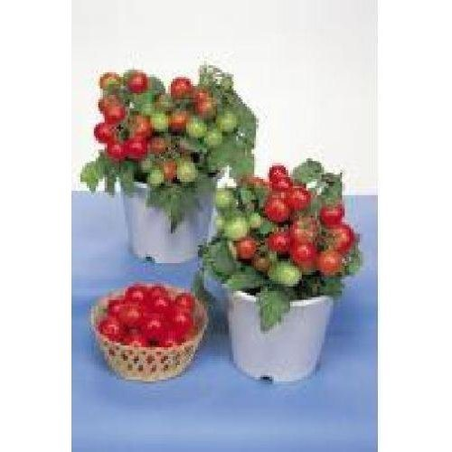 Vegetable - Tomato - Red Robin - 8 Seeds
