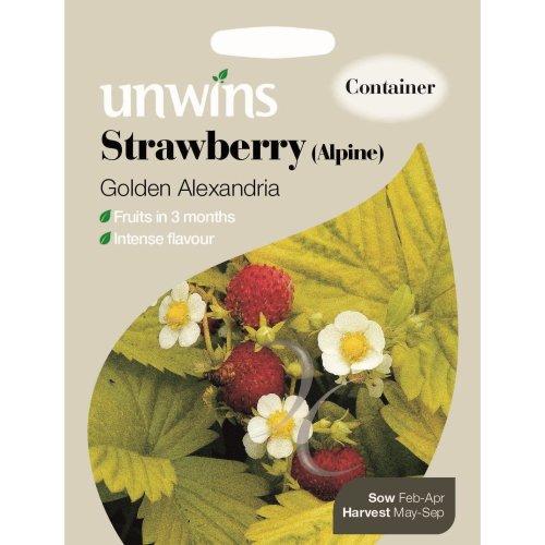 Unwins Pictorial Packet - Strawberry (Alpine) Golden Alexandria - 300 Seeds
