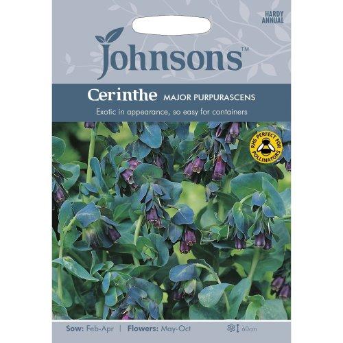 Johnsons Seeds - Pictorial Pack - Flower - Cerinthe major Purpurascens - 20 Seeds