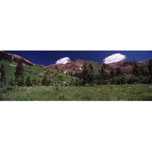 Forest  Crested Butte  Gunnison County  Colorado  USA Poster Print by  - 36 x 12