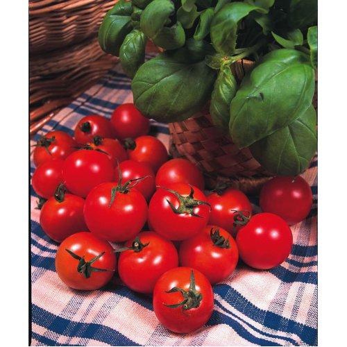 Vegetable - Tomato - Gardeners Delight - 50 Seeds
