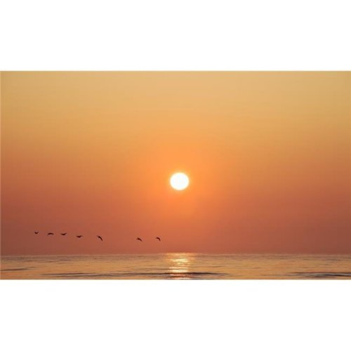 Geese Fly by Sunrise Over Irish Sea Layton County Meath Ireland Poster Print, Large - 36 x 20