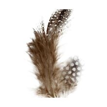 Feathers From Guinea Fowl - Brown, CC 51812