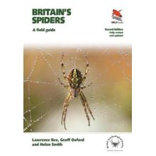 Britain's Spiders