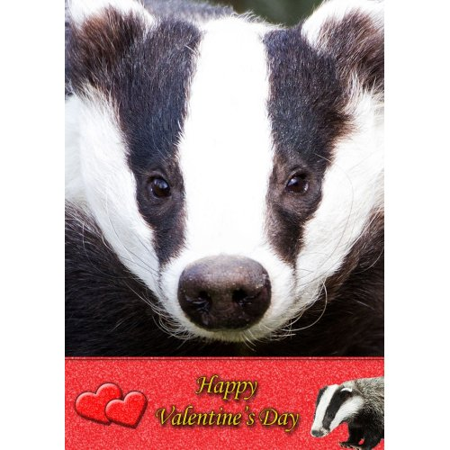 """Badger Valentine's Day Greeting Card 8""""x5.5"""""""