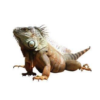 Reptile Supplies & Amphibian Supplies