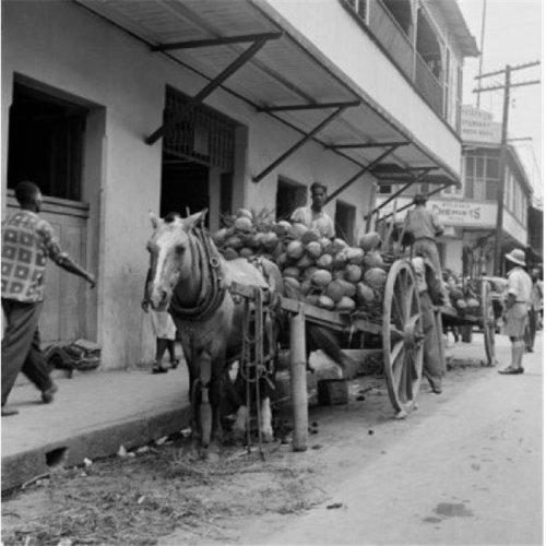 Trinidad & Tobago Trinidad Coconuts On Horsedrawn Carts Poster Print, 24 x 36 - Large