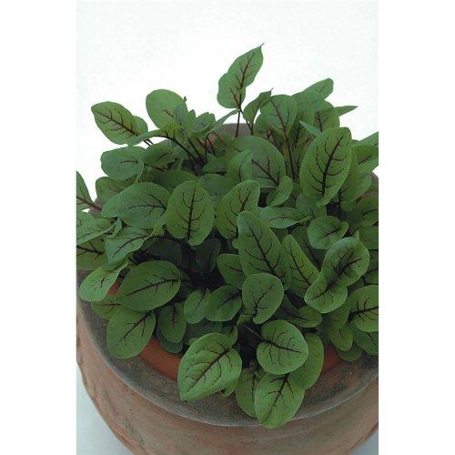 Herb - Sorrel - Red Veined - 1000 Seeds
