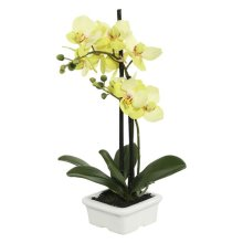 15.5 in. Green Potted Orchid