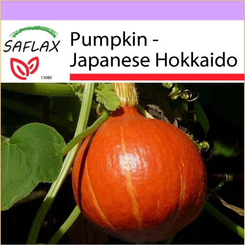 SAFLAX  - Pumpkin - Japanese Hokkaido - Cucurbita maxima - 10 seeds
