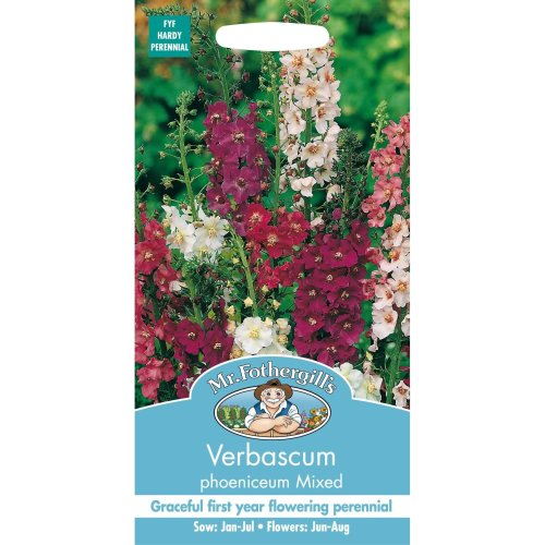 Mr Fothergills - Pictorial Packet - Flower - Verbascum Phoeniceum Mixed - 500 Seeds