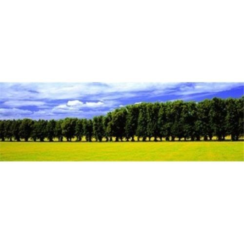 Row Of Trees  Uppland  Sweden Poster Print by  - 36 x 12