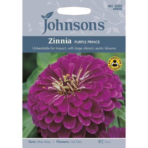 Johnsons Seeds - Pictorial Pack - Flower - Zinnia Purple Prince - 60 Seeds