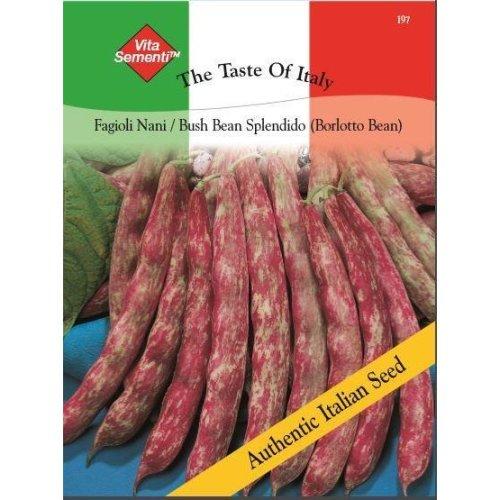 Thompson & Morgan - The Taste of Italy - Vegetables - Bush Bean Splendido (Red) - 60 Gram