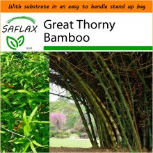 SAFLAX Garden in the Bag - Great Thorny Bamboo - Dendrocalamus arundinacea - 50 seeds - With substrate in a fitting stand up bag.