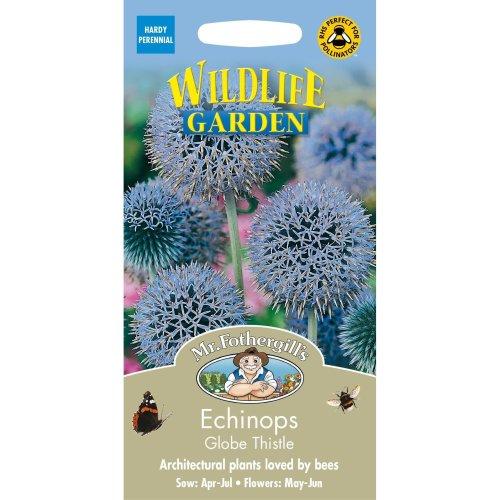 Mr Fothergills - Pictorial Packet - Flower - Echinops Globe Thistle - 50 Seeds