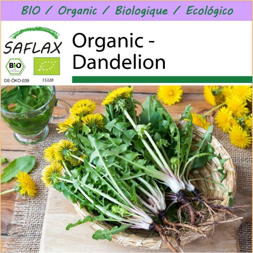 SAFLAX  - Organic - Dandelion - 400 seeds  - Taraxacum officinale