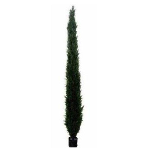 Conifer/Cedar Tree