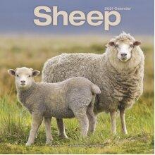 Sheep 2021 Wall Calendar by Created by Avonside Publishing Ltd