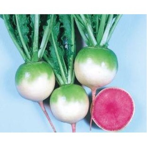Vegetable - Radish - Red Meat - 150 Seeds