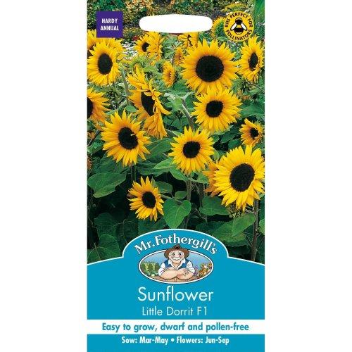 Mr Fothergills - Pictorial Packet - Flower - Sunflower Little Dorrit F1 - 25 Seeds