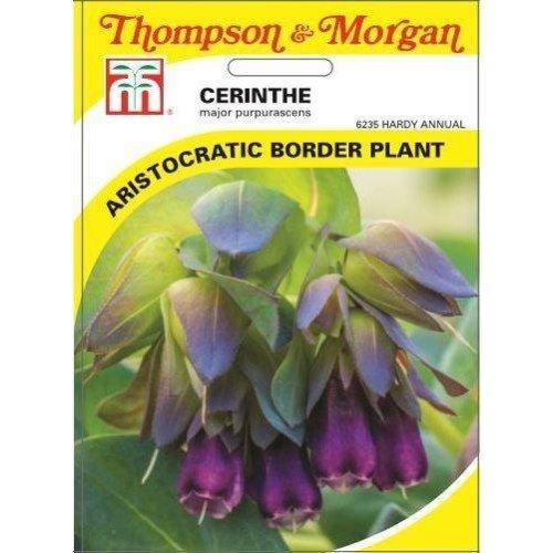 Thompson & Morgan - Flowers - Cerinthe Major Purpurascens - 10 Seed