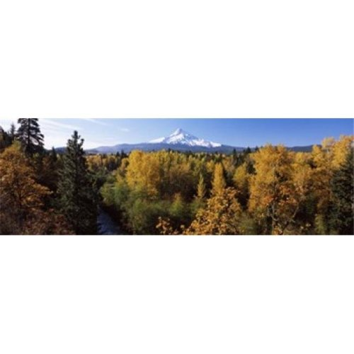 Cottonwood trees in a forest  Mt Hood  Hood River  Mt. Hood National Forest  Oregon  USA Poster Print by  - 36 x 12