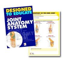 Joint Anatomy Education Manual