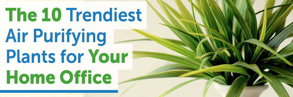 The 10 Trendiest Air Purifying Plants for Your Home Office