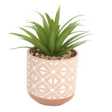 Large Kasbah Succulent in Beautiful Patterned Ceramic Pot