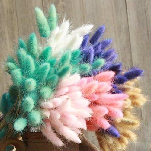 Natural Dried Flowers, Rabbit Tail Grass Bunch, Colorful Lagurus Ovatus Real Bouquet For Home Wedding Decoration