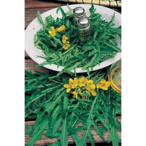 Organic Vegetable - Wild Rocket - 2000 Seeds