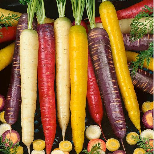 Viridis Hortus Carrot Rainbow Blend 400 Vegetable Seeds