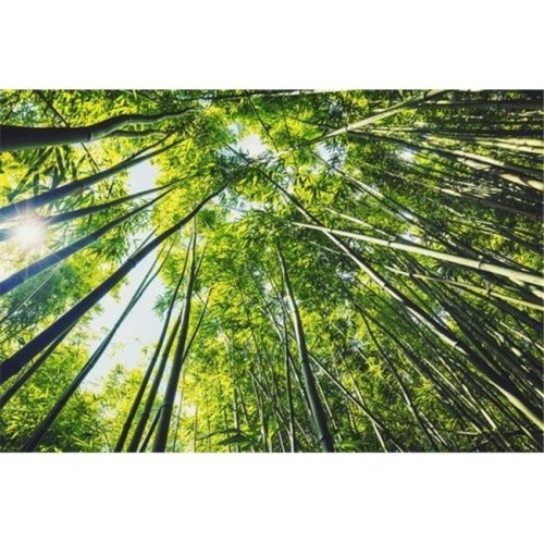 Bamboo Forest with Morning Sunlight Poster Print by Design Pics Vibe, 34 x 22 - Large