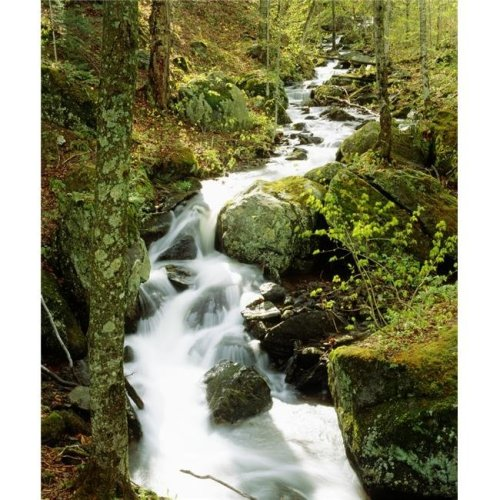 River with Trees in The Forest Poster Print by David Chapman, 26 x 32 - Large
